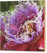 Red Lotus Wood Print