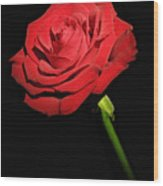 Red Rose On The Black Background  Wood Print