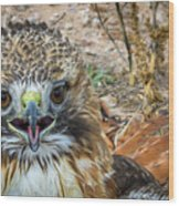 Red-tailed Hawk -5 Wood Print