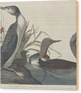 Red-throated Diver Wood Print