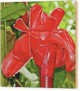 Red Tropical Flower In Huntington Botanical Gardens In San Marino-california Wood Print