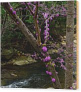 Redbud And River Wood Print