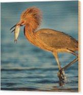 Reddish Egret With Fish Wood Print