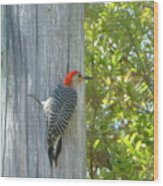 Redheaded Woodpecker Wood Print by Marie Bulger