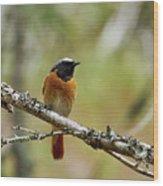 Redstart Wood Print