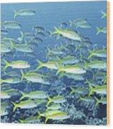 Reef Scene Wood Print