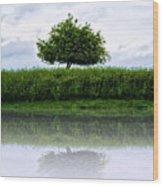 Reflecting Tree Wood Print