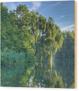 Reflections Of A Weeping Willow Wood Print