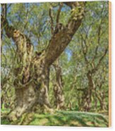 Relaxing Planes Trees Arbor Wood Print