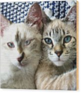 Rescued And Spoiled Wood Print