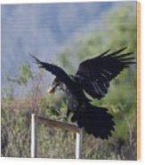 Resident Raven Wood Print