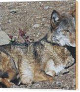 Resting Wolf Wood Print