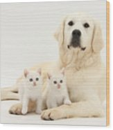 Retriever With Friendly Kittens Wood Print