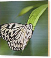Rice Paper Butterfly 5 Wood Print