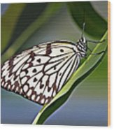Rice Paper Butterfly 8 Wood Print