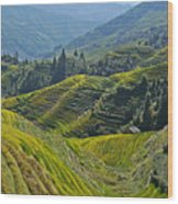 Rice Terraces In Guilin, China  Wood Print