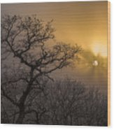Rime Ice And Fog At Sunset - Telephoto Wood Print