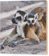 Ring Tailed Lemur With Baby Wood Print