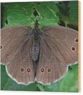 Ringlet Butterfly Wood Print
