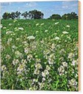 Roadside Wildflowers In Mchenry County Wood Print
