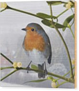 Robin On Mistletoe Wood Print