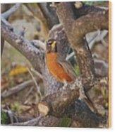 Robin On Cut Down Tree Branch Wood Print