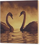 Romantic African Swans Wood Print