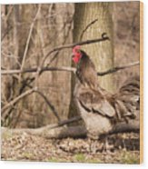 Rooster In The Woods Wood Print