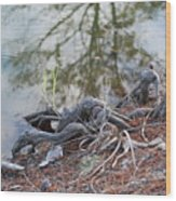Rooted Lake Edge Wood Print