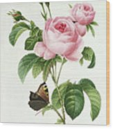 Rosa Centifolia Wood Print by Pierre Joseph Redoute