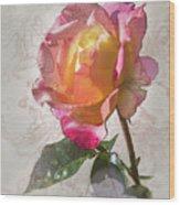 Rosa, 'glowing Peace' Wood Print