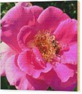 Rose Bee Wood Print