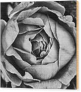 Rose Closeup In Monochrome Wood Print