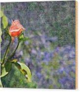 Rose Elegance  Wood Print