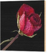 Rose Still Life  Wood Print by Robert Ullmann