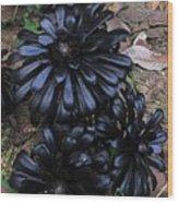 Rose Succulents II Wood Print