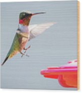 Ruby-throated Hummingbird  Wood Print