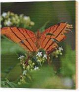 Ruddy Daggerwing Butterfly Wood Print