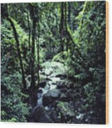 Rushing Stream El Yunque National Forest Wood Print