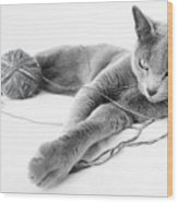 Russian Blue 1 Wood Print