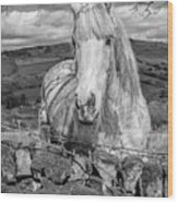 Rustic Horse  Wood Print