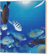 Saipan Marine Life Wood Print