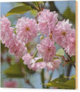 Sakura Flowers Wood Print