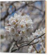 Sakura Spring Wood Print