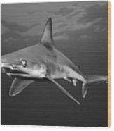 Sandbar Shark Wood Print