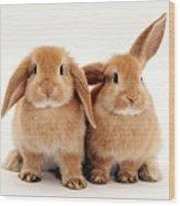 Sandy Lop Rabbits Wood Print