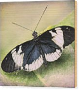 Sapho Longwing Butterfly Wood Print