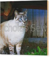 Sapphire Eyed Cat Wood Print