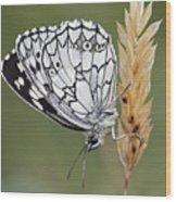 Satyr On The Grass Wood Print
