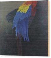 Scarlet Macaw   Three Wood Print